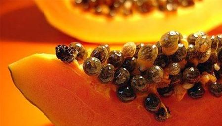 Bài thuốc trị bệnh gai cột sống hiệu quả bằng hạt đu đủ